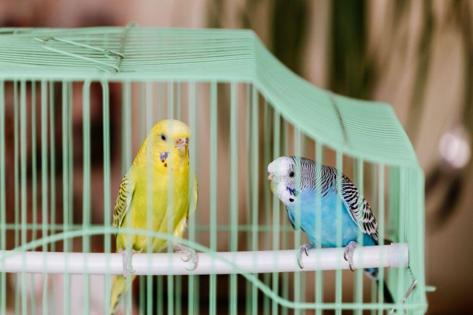 Compra todos los pájaros que un señor vendía en la calle para liberarlos al instante