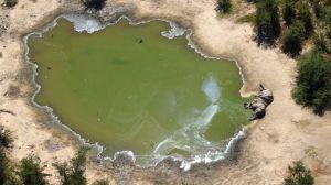 """Muerte de elefantes en Botsuana: el misterio que rodea el deceso """"sin precedentes"""" de cientos de ejemplares"""