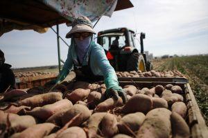 Inmigrantes y refugiados tienen 80 por ciento de posibilidades de ser trabajadores esenciales