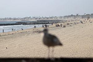 Marea alta convirtió a Newport Beach, California, en una pequeña Venecia; levantan muralla de arena