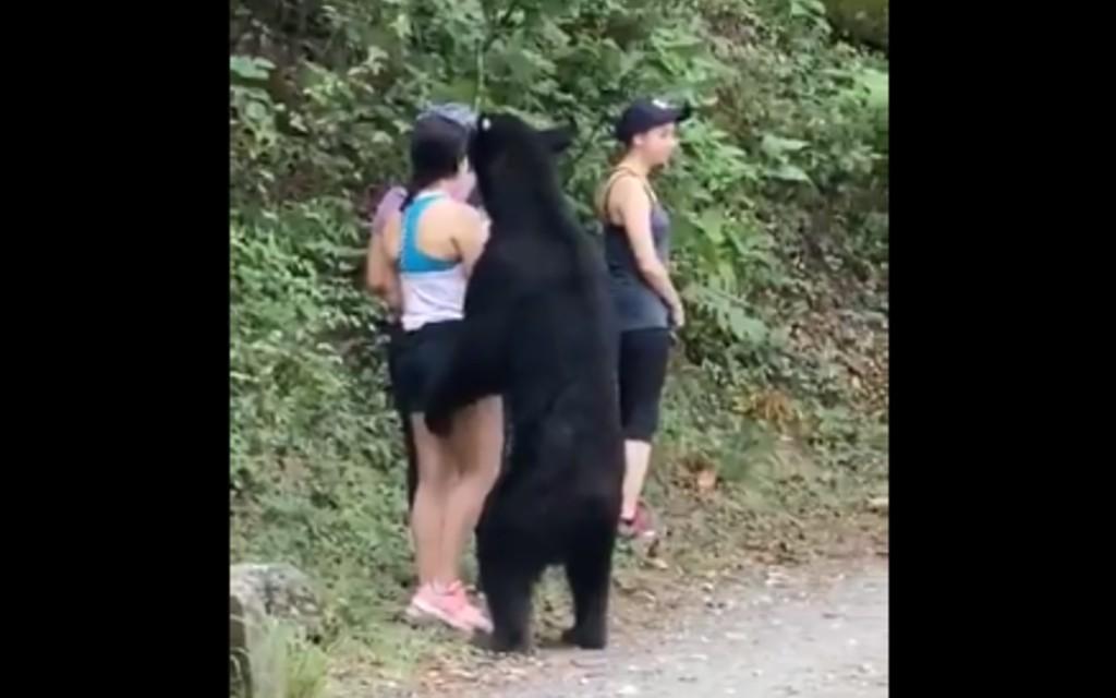 VIDEO: Captan momento en que un oso se acerca a tres mujeres en parque ecológico de México