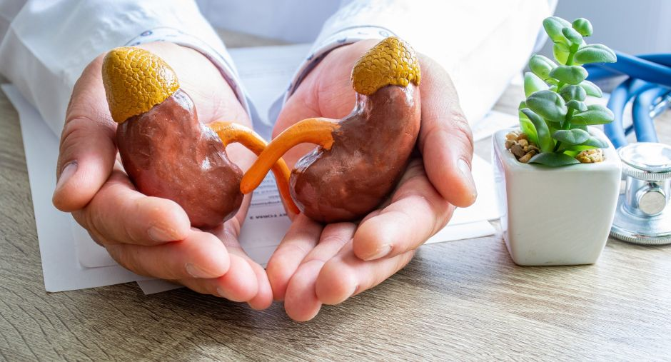 Los mejores suplementos para la salud de tus riñones