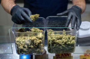 Empresarios piden a Gobierno de México aprovechar el cannabis tras implementación del T-MEC