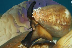 Investigadores mexicanos estudian veneno de caracol para combatir enfermedades neurodegenerativas