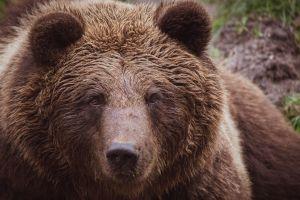 La visita sorpresa de un pequeño oso a una casa se hace viral