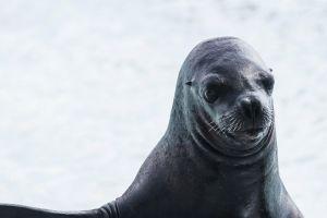 Turistas golpean a foca hasta dejarla inconsciente para que niños puedan fotografiarse con ella