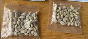 Hombre plantó misteriosas semillas que recibió de China y creció algo increíble
