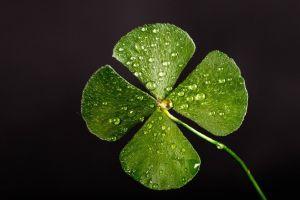4 tipos de suerte que te dará el trébol de cuatro hojas... si encuentras uno