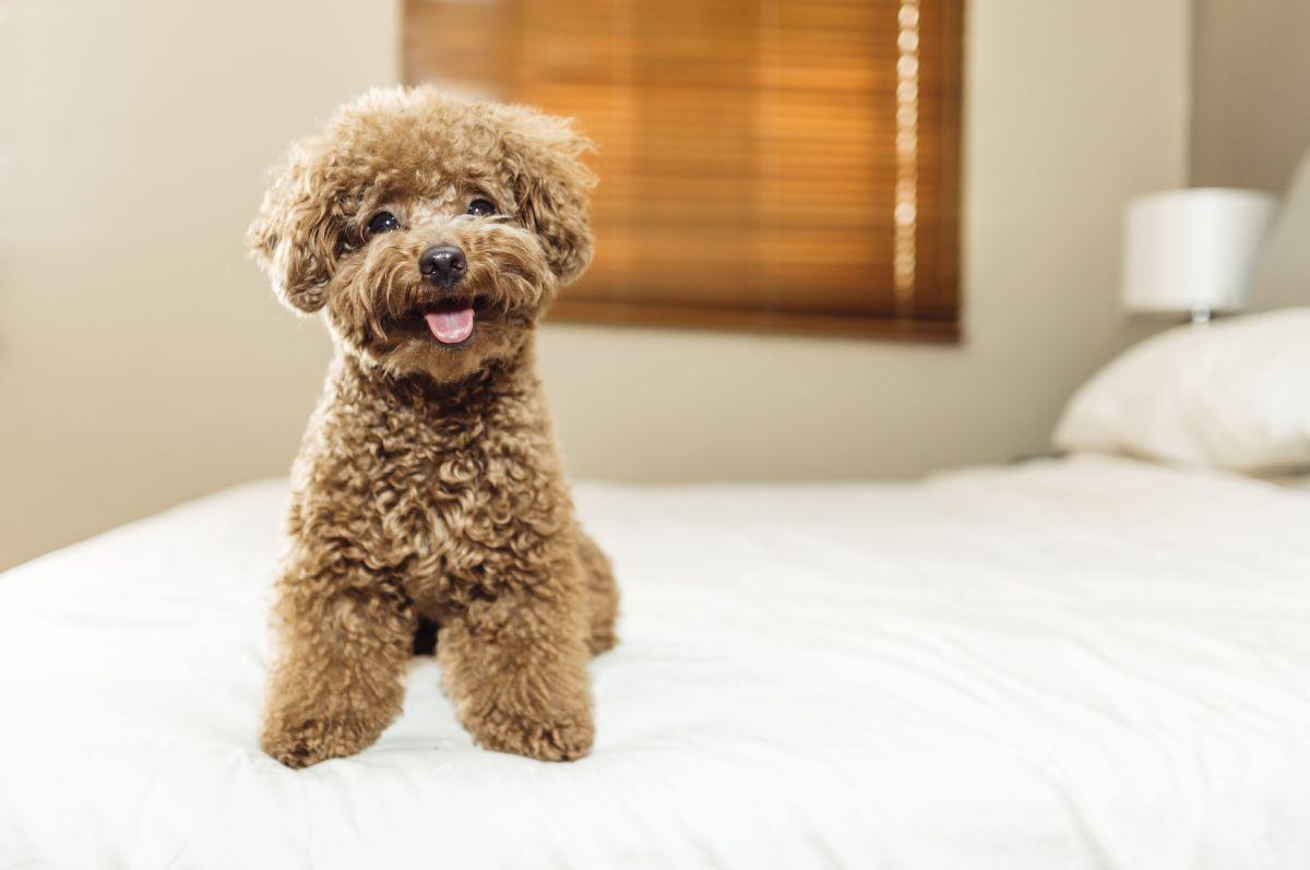 Video de cachorro visitando por primera vez la estética canina cautiva y supera los 10 millones de reproducciones