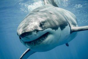 El impactante momento en que un policía salva a un niño de ser atacado por un tiburón en playas de Florida