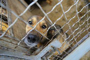 La triste reacción de una perra que por segunda vez es devuelta a un refugio de animales