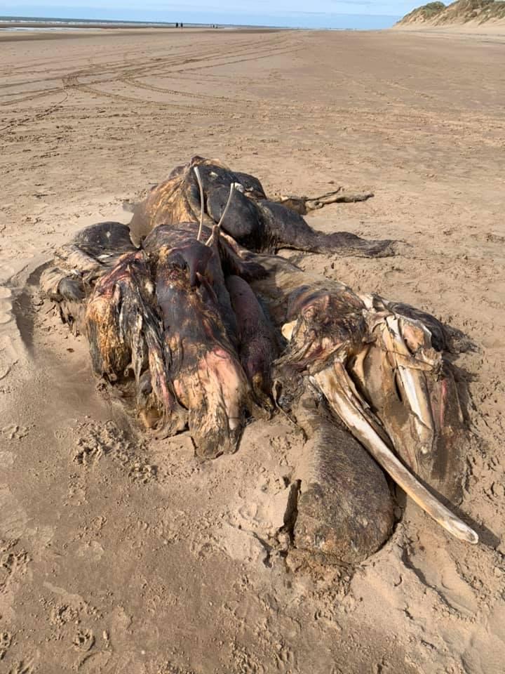 Aparecen restos de una extraña bestia en playa del Reino Unido