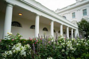 FOTOS: Melania Trump presume remodelación del Jardín de las Rosas en la Casa Blanca