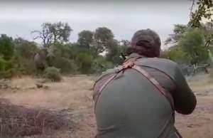 Conmoción por video de estadounidense asesinando a un elefante en África