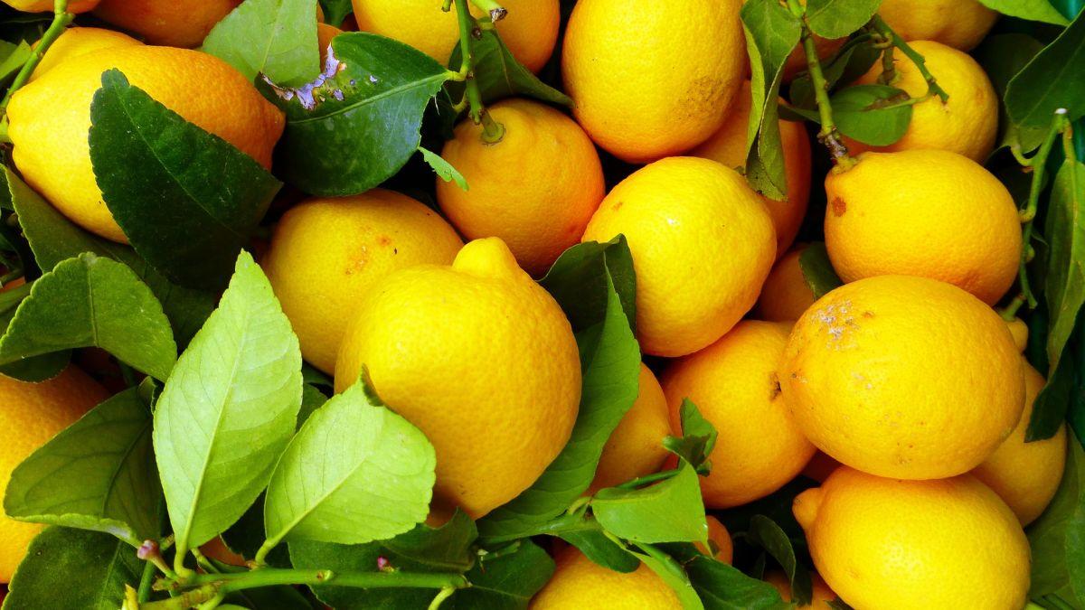 La cáscara de limón concentra grandes propiedades, es ideal para perder peso, combatir la indigestión y gripes.