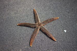 """Captan a estrella de mar a la orilla de la playa y se vuelve viral por sus """"patas"""""""