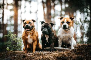 Adolescente se debate entre la vida y la muerte tras ser atacada por 2 perros pitbull