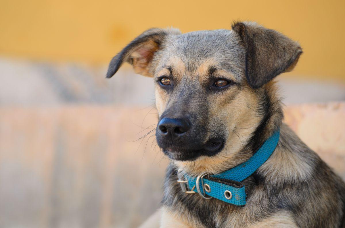 Remedios caseros para eliminar la caspa en las mascotas