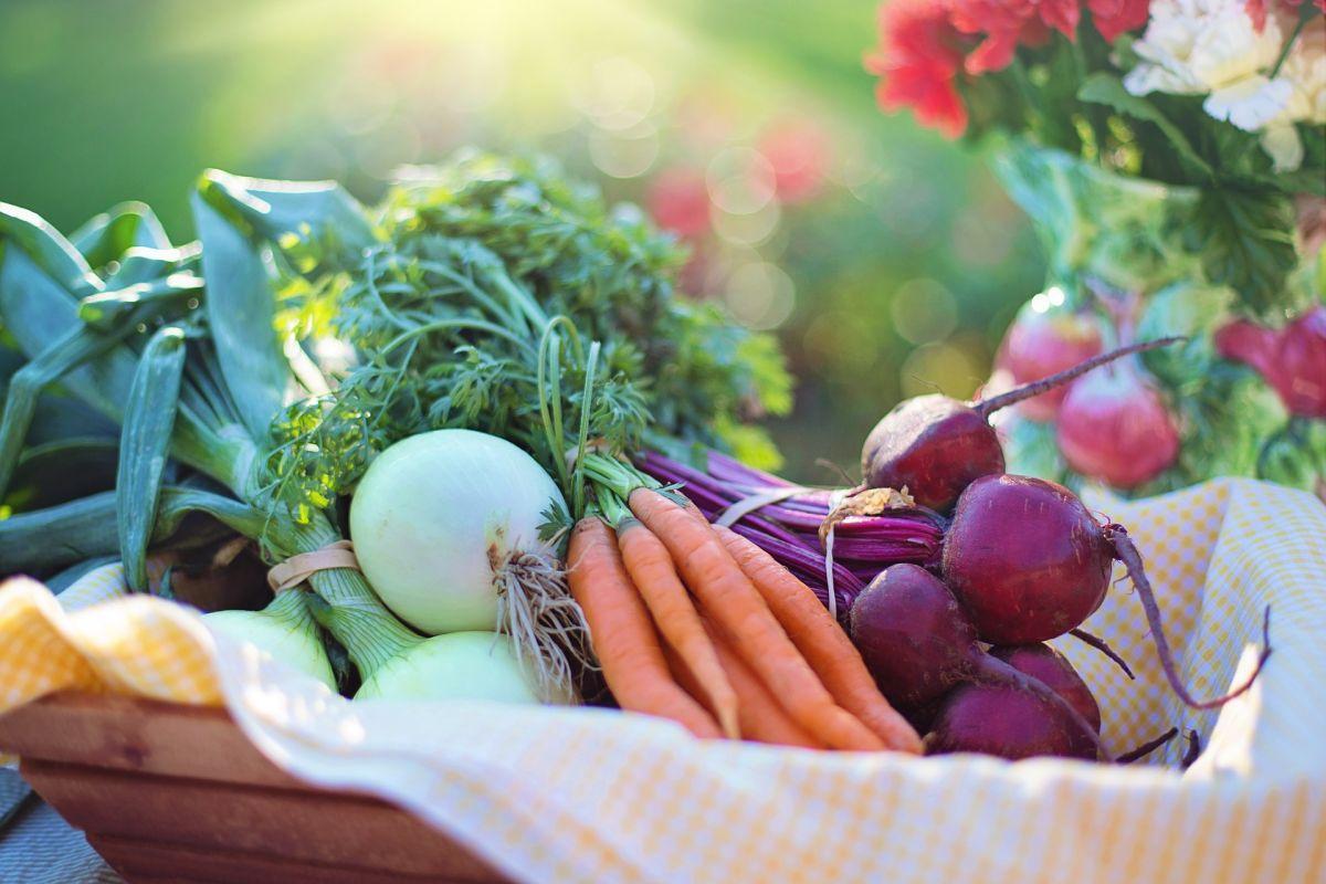 Conoce la inspiradora historia de Josephine Spagnero y su inicio en la dieta vegetariana.