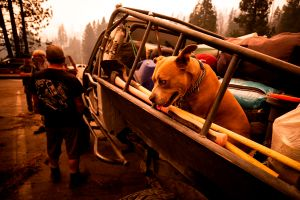 El incendio Bobcat se expande rápidamente y extienden alerta de evacuación desde Arcadia hasta Pasadena