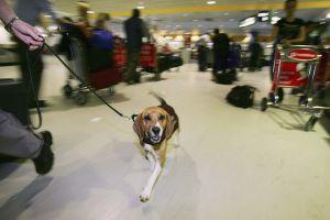Finlandia tiene una nueva arma para luchar contra el COVID-19: perros