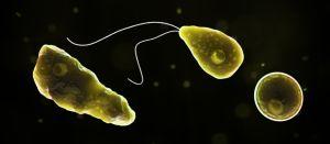 8 ciudades de Texas en alerta: hallan ameba devoradora de cerebros en el suministro de agua