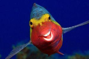 Imágenes que te harán reír, fotografías de los premios Comedy Wildlife