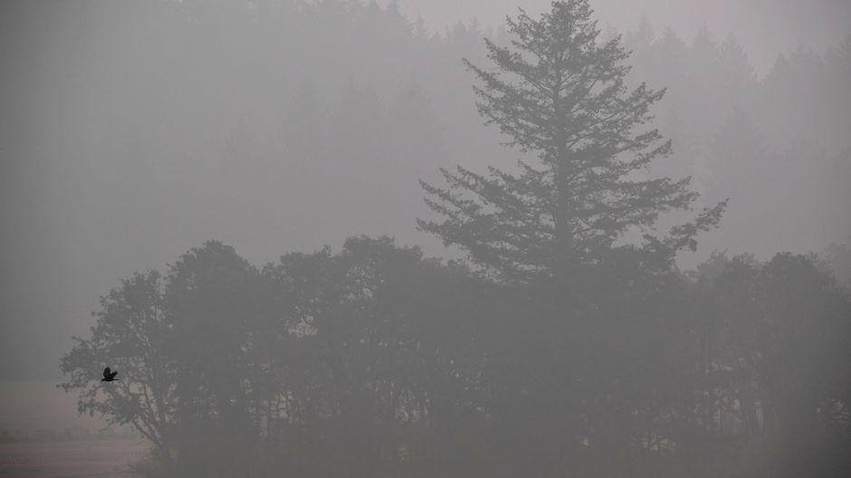 La mala calidad del aire en California impide juego entre Gigantes y Marineros