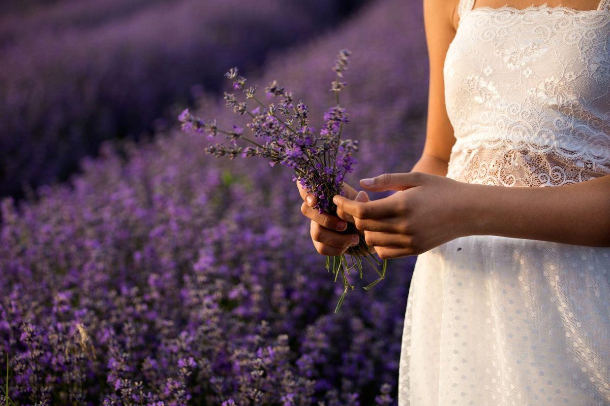La lavanda es una de las hierbas medicinales más valoradas para calmar el estrés, la ansiedad y mejorar la calidad del sueño.