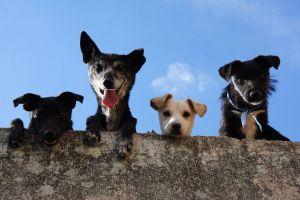 Conmueven perros que asisten al funeral de la mujer que les daba de comer todos los días