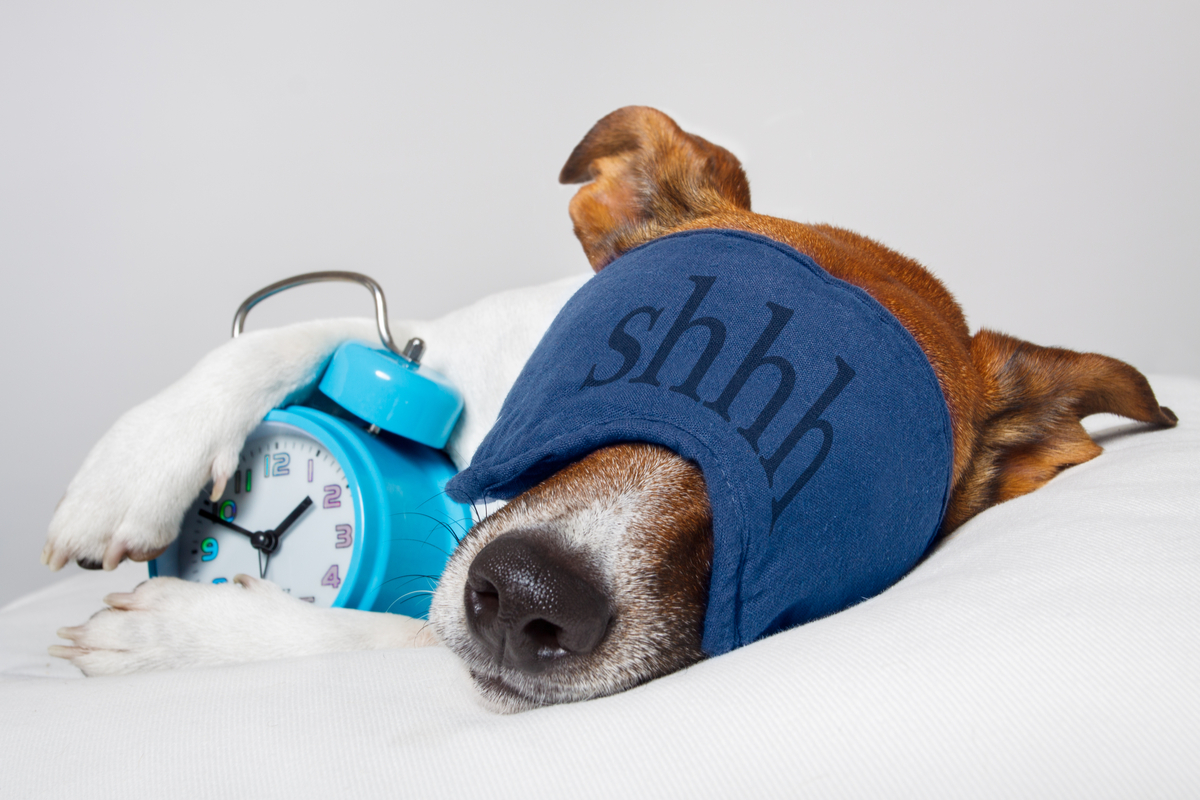 Las 5 mejores camas para perros que a tu mascota le encantarán