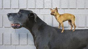 """Los perros son nuestros """"mejores amigos"""" y ahora sabemos que también son los más antiguos"""