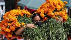 Día de Muertos: cuál es el origen y significado de la flor de cempasúchil, la reina de los altares en México
