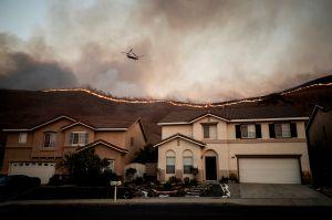 Un loro alerta a un hombre de que su casa se está quemando