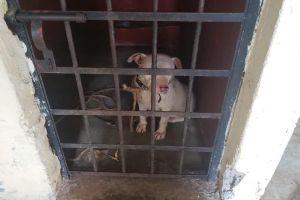 Insólito, encarcelan a perro por escaparse de su casa, lo mantuvieron sin agua y comida