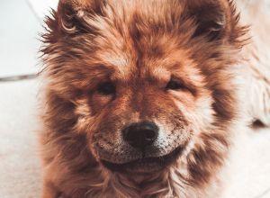 Imágenes que te harán más feliz: perritos en silla de ruedas jugando en la nieve