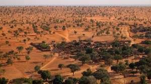 ¡Impresionante! Hallan cientos de millones de árboles en el desierto del Sahara