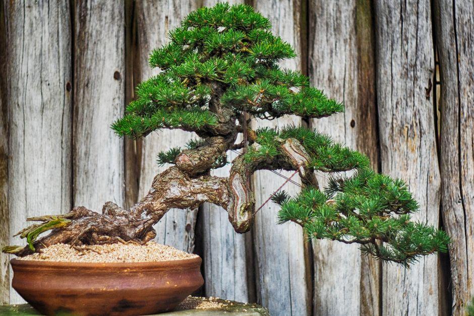 Evita tener estas plantas dentro de tu hogar porque atraen mala suerte, según el Feng Shui