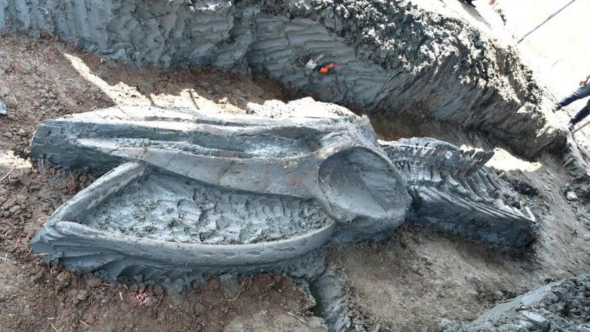 Hallan en Tailandia el esqueleto casi intacto de una ballena de hace al menos 3,000 años