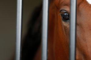 """""""Galileo"""", el caballo pura sangre que cuesta más que Leo Messi"""