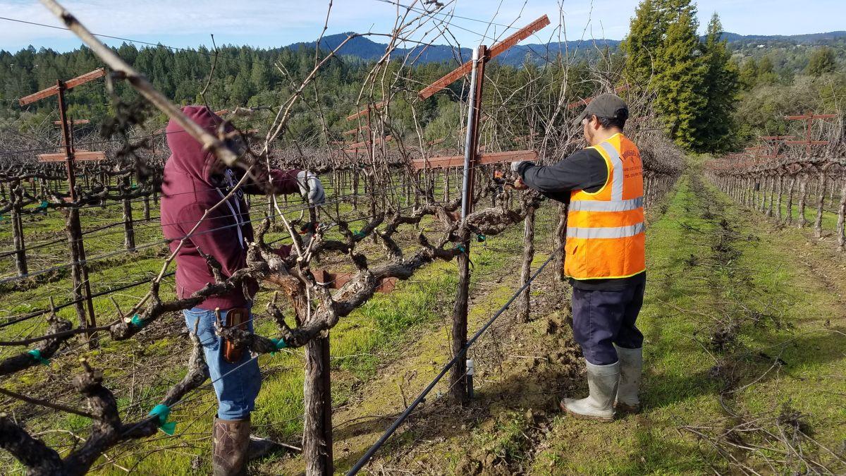Trabajadores del campo alegan que no se les proveen mascarillas.