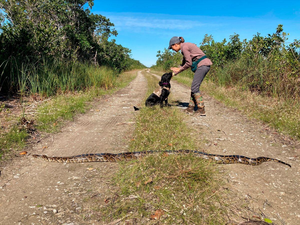 """El perro """"Truman"""" posa tras una pitón cazada por él en Miami-Dade."""