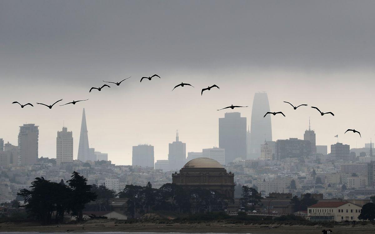 Pelícanos vuelan por encima de la ciudad de San Francisco.