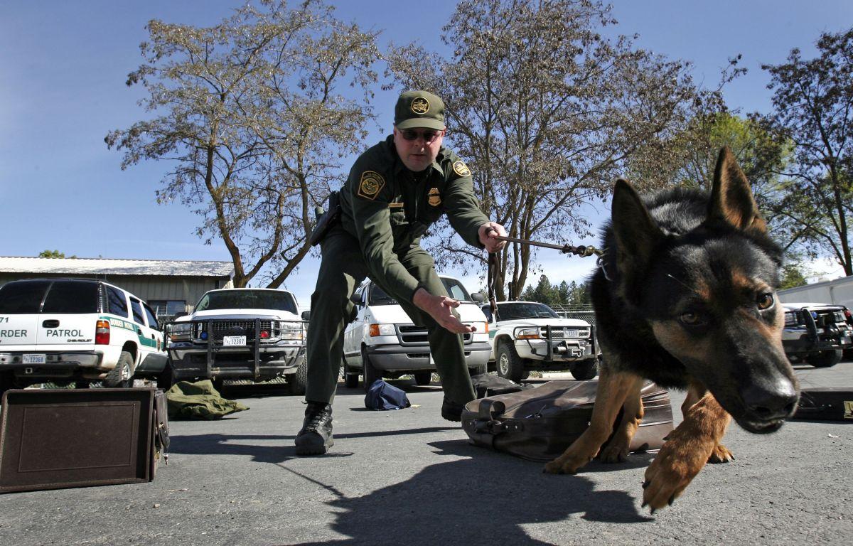 Hispano graba a un policía de California golpeando brutalmente a un perro K-9 y hace viral el video