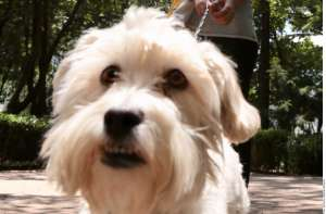 Lo llevaron al hospital en ambulancia, su perro lo esperó en la puerta por días: la increíble historia es viral en todo el mundo