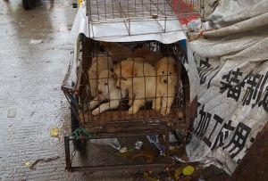 VIDEO: Carne de perros y gatos sigue vendiéndose en China a pesar de prohibición