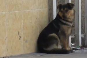 Repartidor de comida roba un cachorro, que fue el regalo de Navidad de la familia