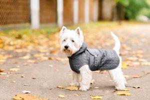 Temporada de frío: Los mejores abrigos y accesorios para cuidar a tus mascotas de las bajas temperaturas
