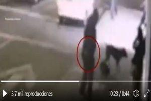 VIDEO: Momento exacto que dispara y mata a perrita; piden identificarlo