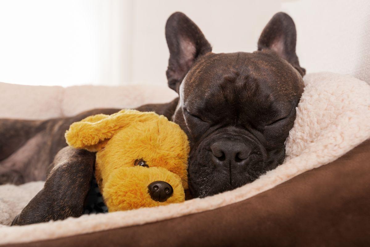 Las 3 mejores camas ortopédicas para perros